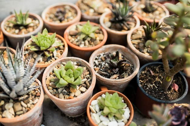 High angle of plants in brown pots