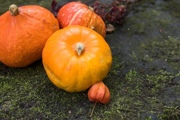 High angle pumpkins arrangement on moss