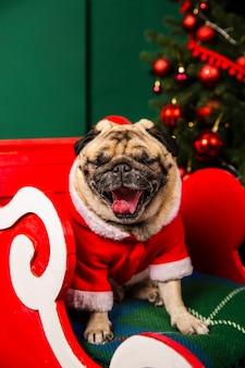 High angle santa dog with tongue out