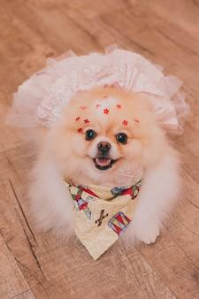 ハイアングルは、ポーズをとって直接見ている笑顔のかわいいウェディングドレスを着てチワワを撮影しました