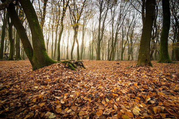 High angle shot of autumn leaves on the ground of forest with trees