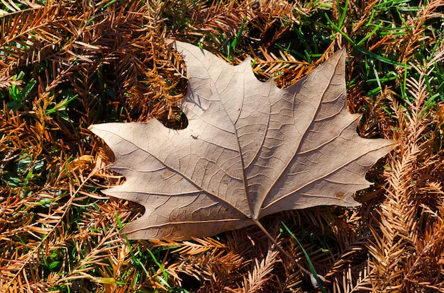 High angle shot of a beautiful autumnal leaf fallen on the leaf-covered ground