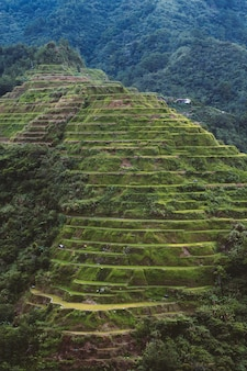 High angle shot of a beautiful landscape in banaue rice terraces, ifugao province, philippines