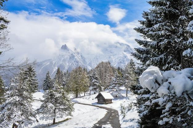 Inquadratura dall'alto di bellissimi alberi innevati, cottage e montagne