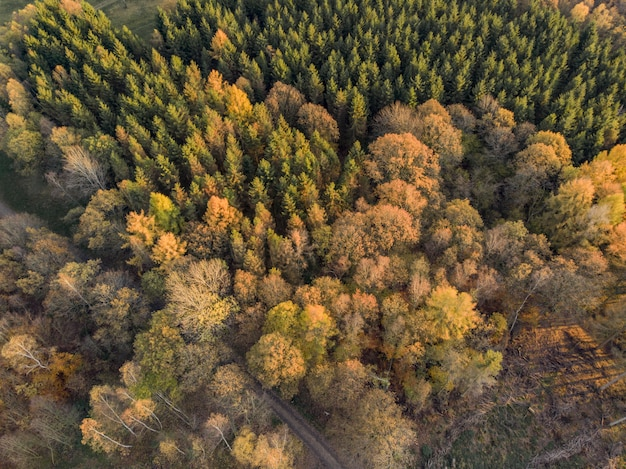 High angle shot of the beautiful trees on a fields captured at day time