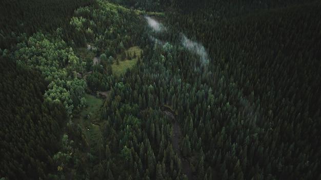 High angle shot of beautiful tropical jungle full of trees