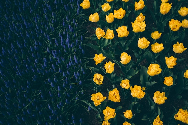 High-angle shot of a bed of yellow flowers in a beautiful green field