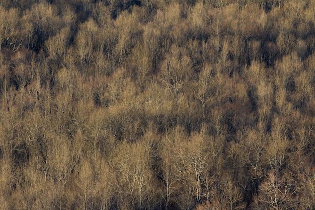 High angle shot of a big forest of dry trees in istria, croatia
