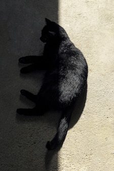 High angle shot of a black cat lying down on the ground