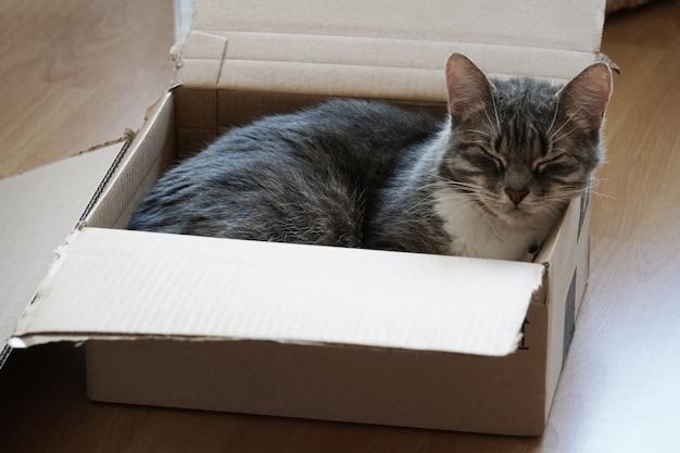 Inquadratura dall'alto di un simpatico gattino che dorme in un cartone su una superficie di legno