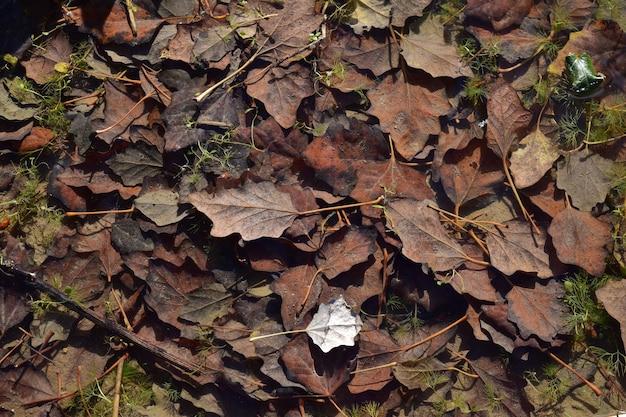 Colpo di alto angolo di foglie secche sul terreno sotto la luce del sole in autunno a malta