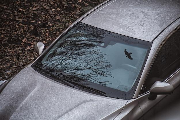 Inquadratura dall'alto di un albero secco e di un uccello in volo riflesso sul parabrezza