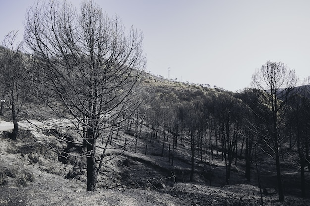 High angle shot of a dry winter forest covered with snow