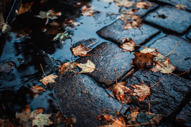 High angle shot of fallen autumn leaves on the wet cobblestone ground