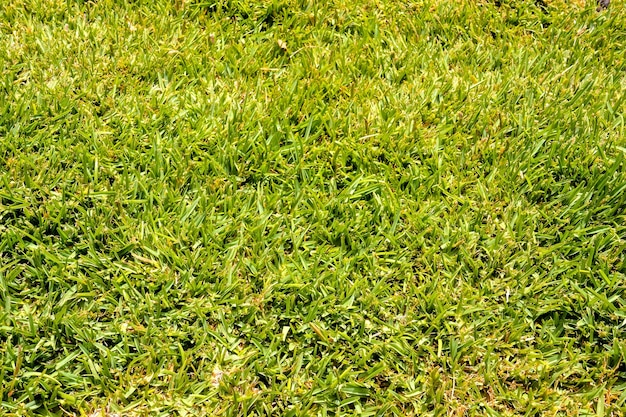Colpo di alto angolo di erba verde durante il giorno