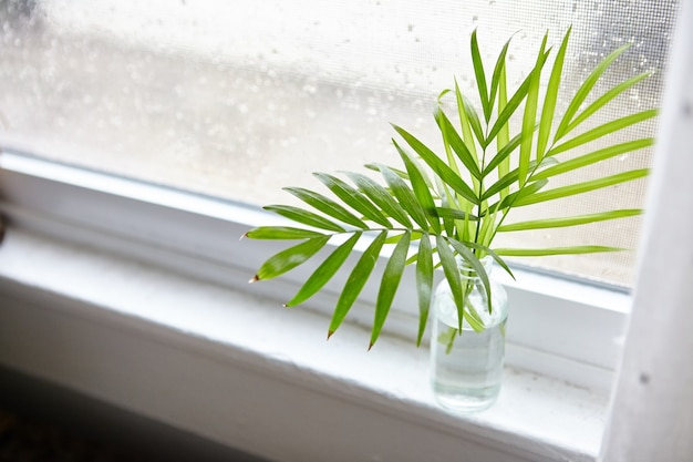 High angle shot of houseplant leaves in a bottle with water near the window