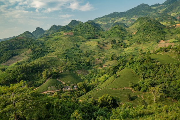 Colpo di alto angolo di un paesaggio con alberi verdi e montagne sotto il cielo nuvoloso