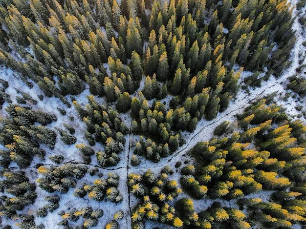Colpo di alto angolo di una grande foresta coperta di neve