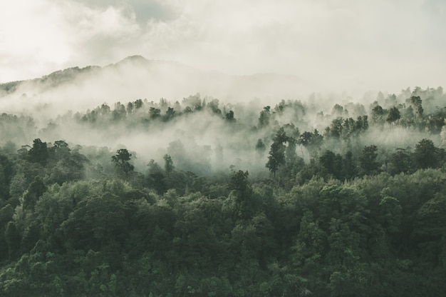 Снимок красивого леса с множеством зеленых деревьев, окутанных туманом, под высоким углом в новой зеландии.