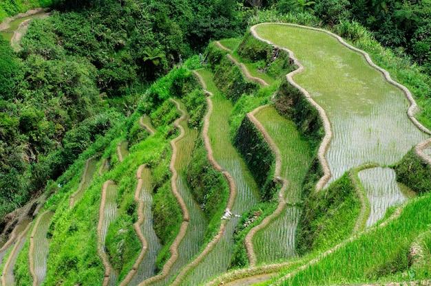 フィリピン、イフガオ州、バナウエ棚田の美しい風景のハイアングルショット