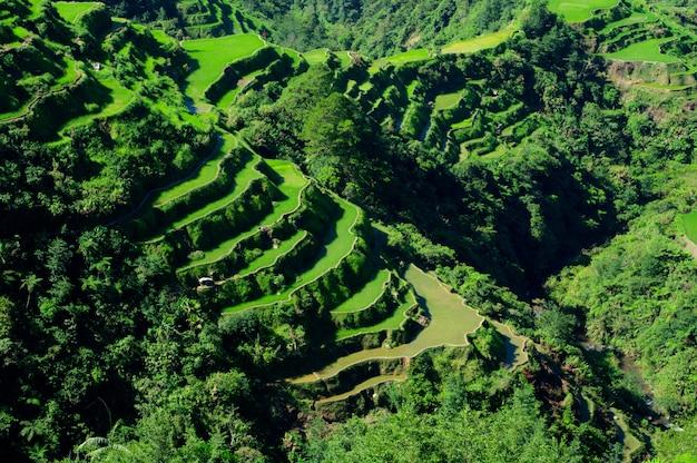 フィリピンのイフガオ州バナウエの棚田の美しい風景のハイアングルショット