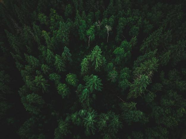 이국적인 키 큰 나무와 아름다운 열대 정글의 높은 각도 샷