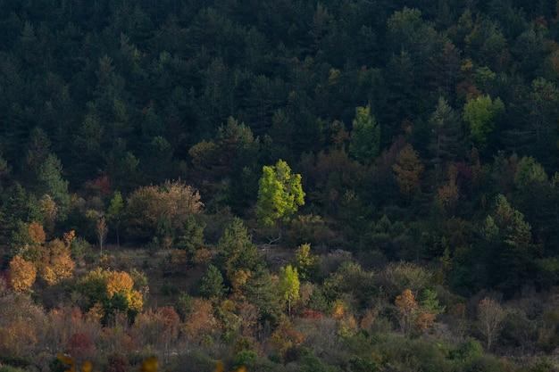 クロアチア、イストリア半島の秋の森の美しい景色のハイアングルショット