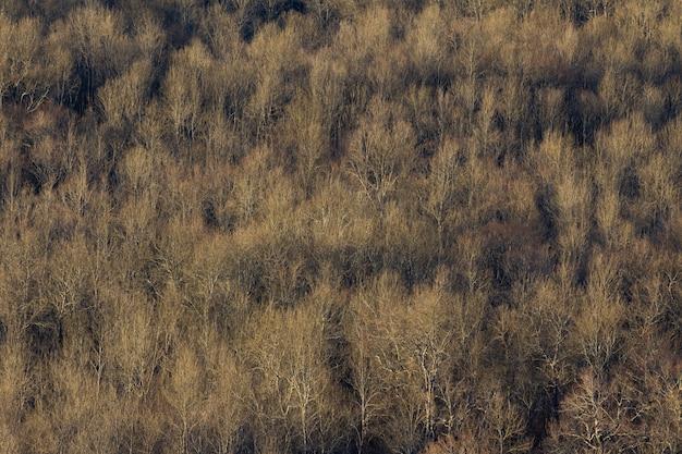 クロアチア、イストリア半島の乾燥した木の大きな森のハイアングルショット