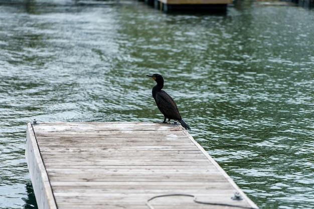 木製の桟橋に腰掛けている鵜鳥のハイアングルショット
