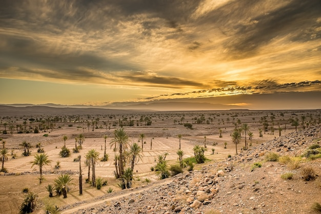 Снимок с большим углом нескольких растений, растущих в пустынном районе под облачным небом во время заката