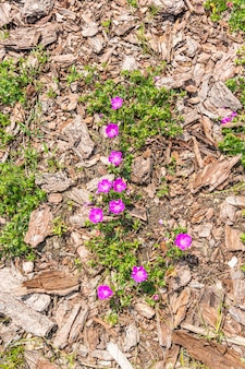 地面に生えている花のハイアングルショット