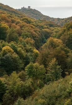 Высокий угол выстрела зеленого дерева леса в дневное время