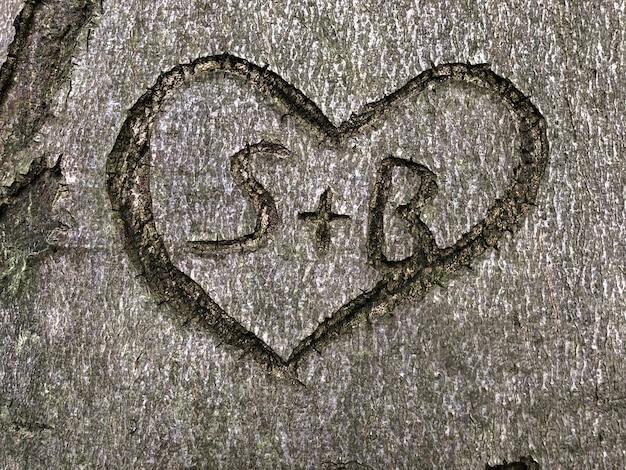 木に刻まれたハートのシンボルのハイアングルショット