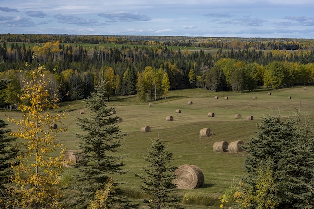 カナダ、クリアウォーターの樹木の近くの畑で干し草が転がるハイアングルショット