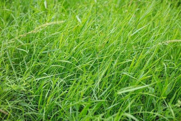 일광에서 캡처 한 초원을 덮고있는 아름다운 녹색 잔디의 높은 각도 샷