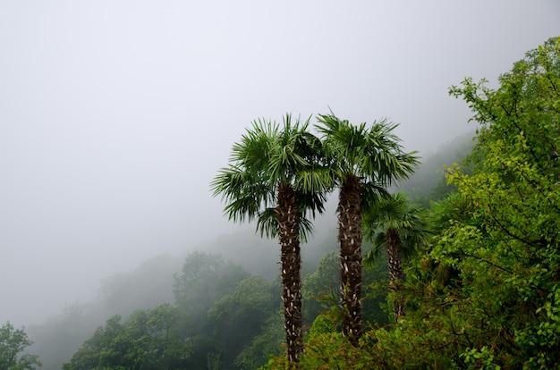 Снимок красивых пальм посреди туманного леса под высоким углом