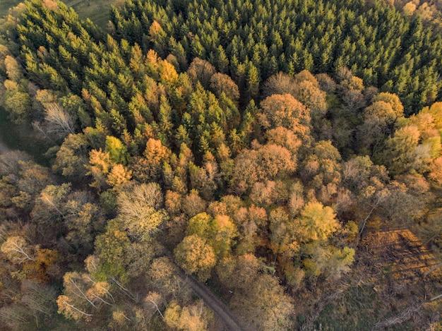 昼間に撮影されたフィールドの美しい木のハイアングルショット