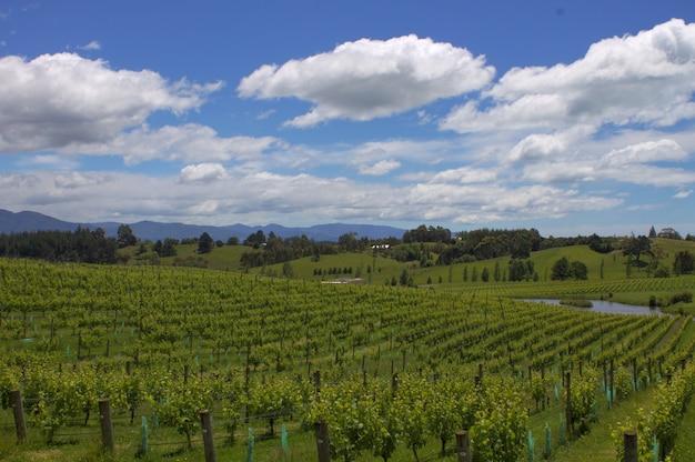 ニュージーランドの曇り空の下でのブドウ園のハイアングルショット