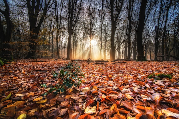 High angle shot of red autumn leaves on the ground in a forest with trees on the back at sunset