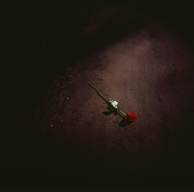 High angle shot of a red rose on the ground at night