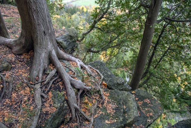 High angle shot of the roots of a tree as they grow in the forest surrounded by trees and grass