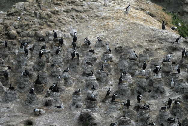 High angle shot of sea birds standing on rocks