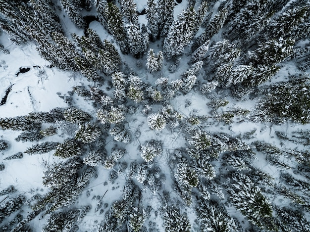 High angle shot of spruces covered with snow in the winter