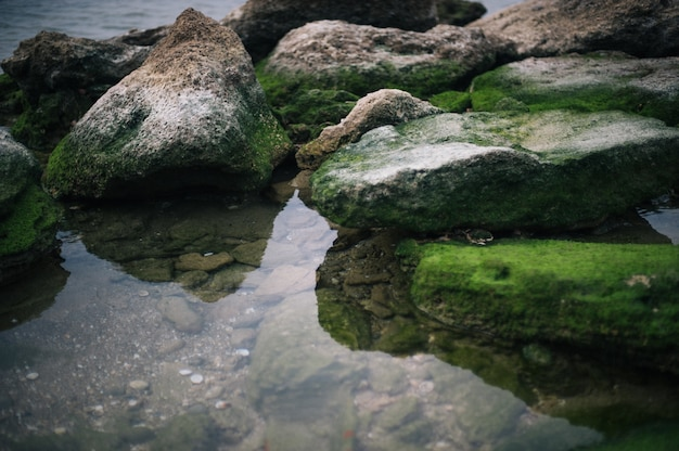 High angle shot of stones covered by green moss in the water