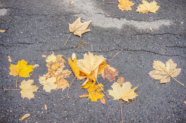 High angle shot of yellow autumn laves on concrete ground