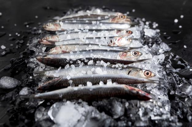 Angolo alto di piccoli pesci sopra i cubetti di ghiaccio