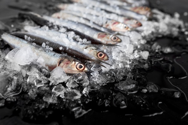 High angle of small fish with ice