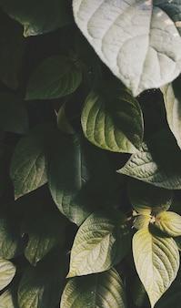 Colpo verticale dell'angolo alto delle foglie verdi che crescono nel mezzo di un giardino