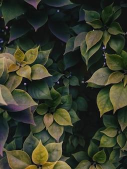 Высокий угол вертикальный выстрел из зеленых листьев, растущих в середине сада