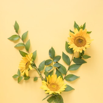 High angle view of beautiful yellow sunflowers on colored background
